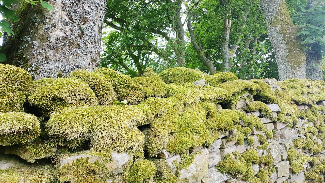 Moss Outdoors No People Nature Beauty In Nature Backgrounds Scenics English Countryside Dry Stone Wall Yorkshire Dales Green Color Moss-covered Mossy Wall Wensleydale Nature