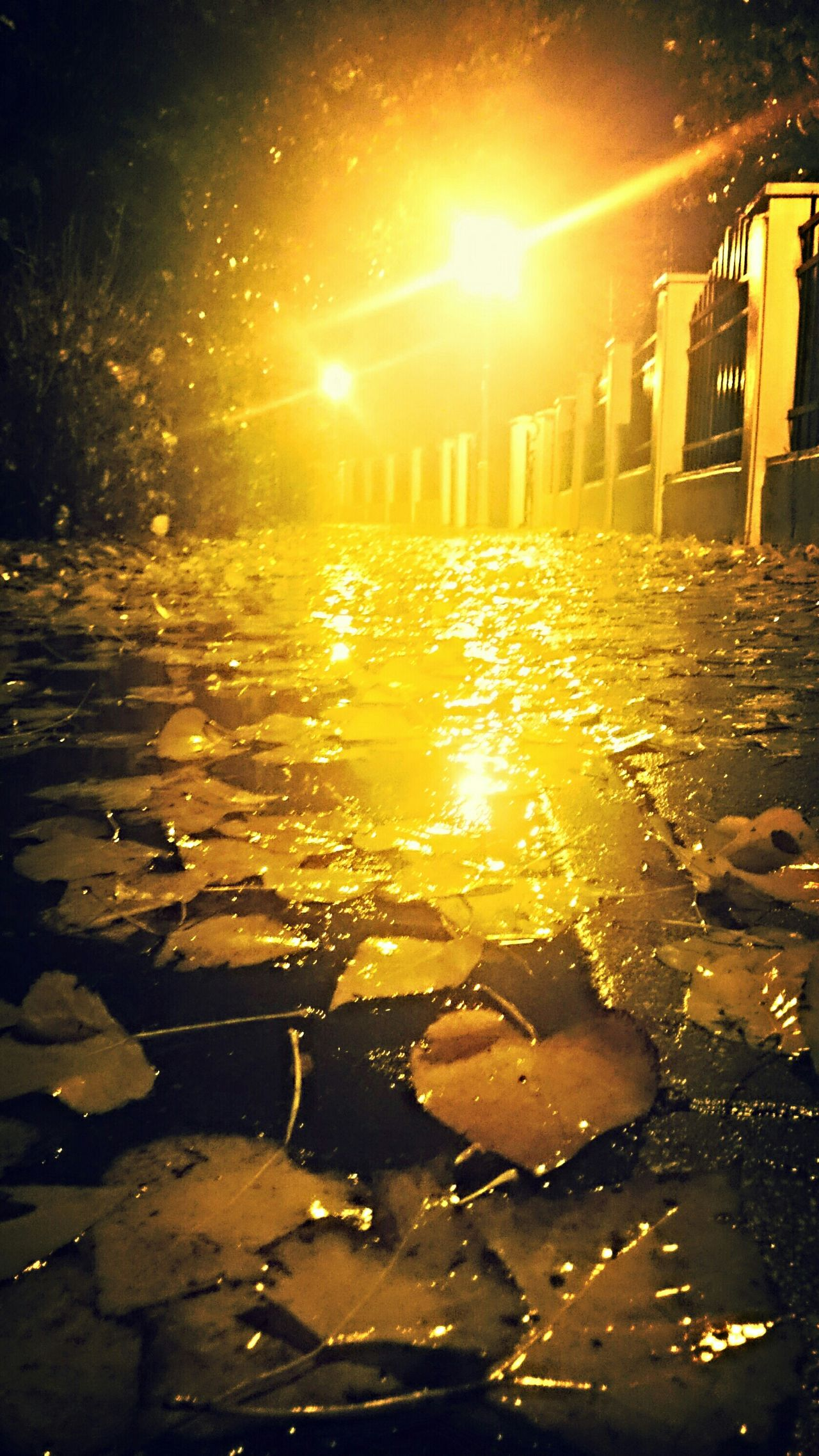 Rainy Night Leaves In Water Autumnbeauty Autumn Night