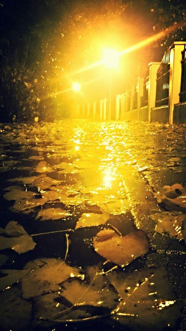 Rainy Night Leaves In Water Autumnbeauty Autumn Night