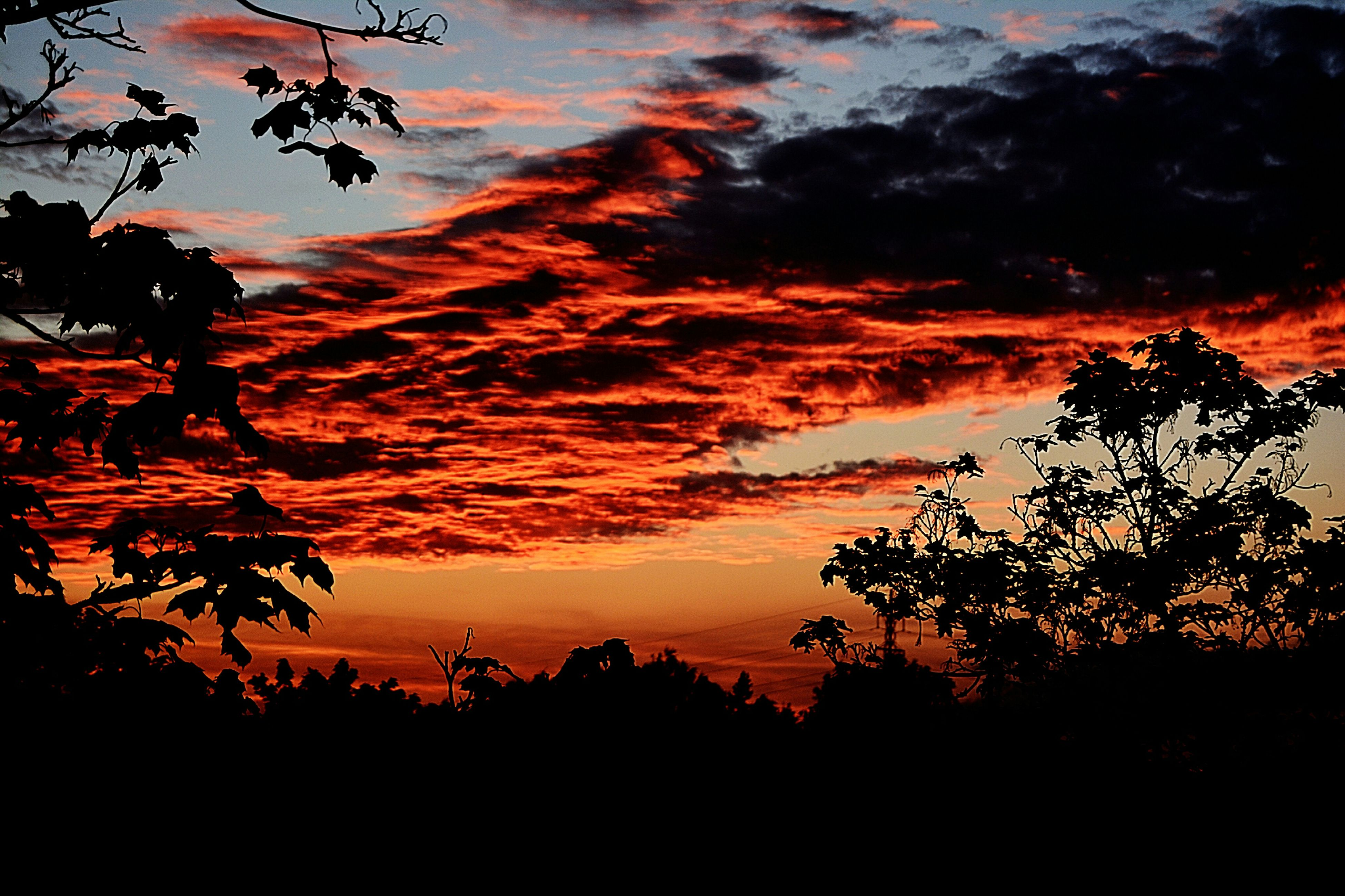 sunset, silhouette, tree, sky, beauty in nature, orange color, scenics, tranquility, tranquil scene, cloud - sky, nature, idyllic, low angle view, dramatic sky, branch, cloud, growth, outdoors, majestic, cloudy