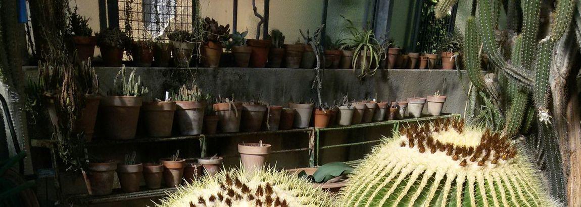 @matflo @matflo Photography Cactus Cactus Collection Cactus Garden Cactus Paradise Cactus Plant Cactus Pot Cactuses Cactusporn Collection Day Edited By @wolfzuachis Freshness Group Of Objects In A Row Large Group Of Objects Matflo No People Plants Portrait Retail  Shelf Uploaded By @wolfzuachis Variation
