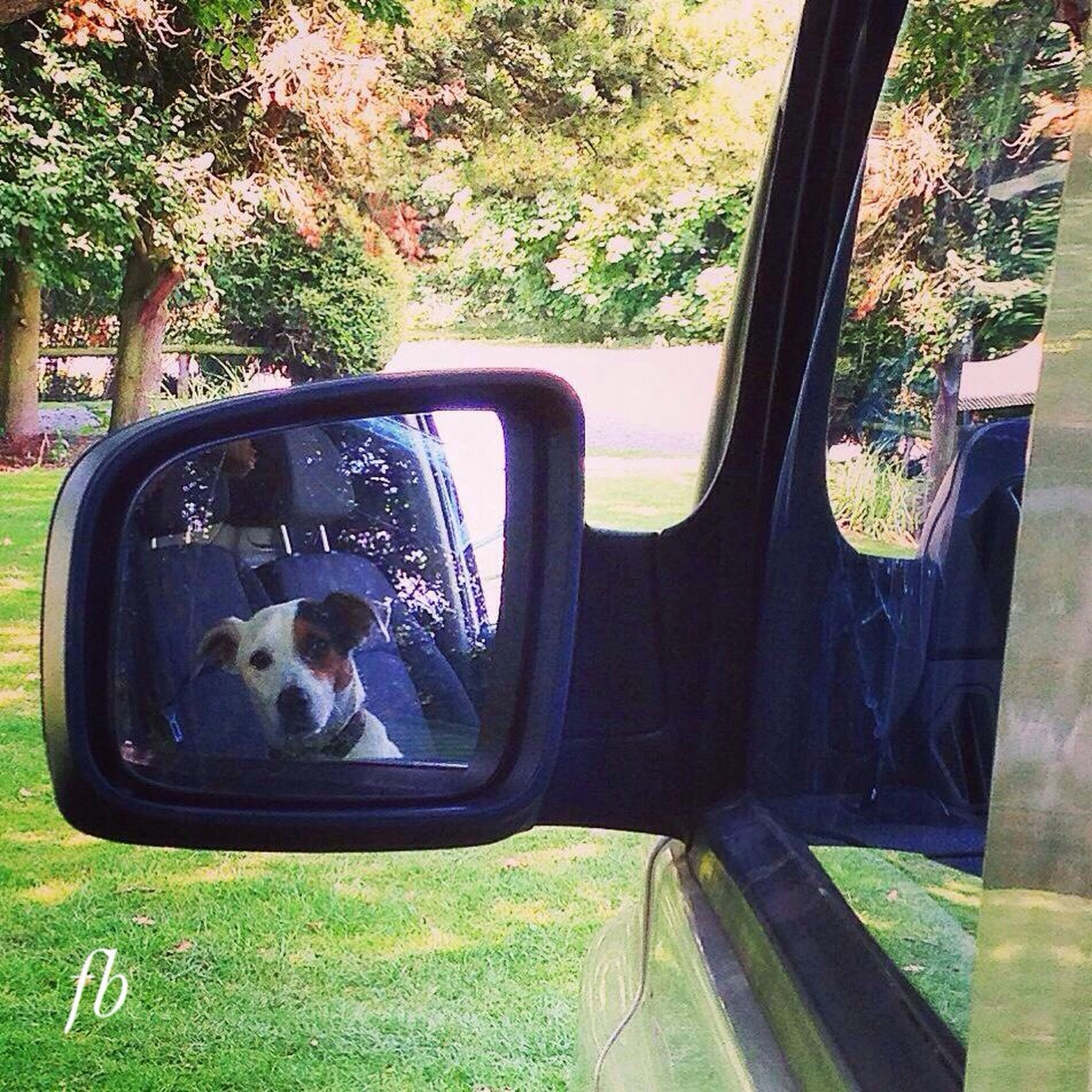 domestic animals, pets, one animal, mammal, animal themes, transportation, car, land vehicle, mode of transport, dog, window, glass - material, tree, grass, sitting, transparent, looking through window, relaxation, vehicle interior, reflection