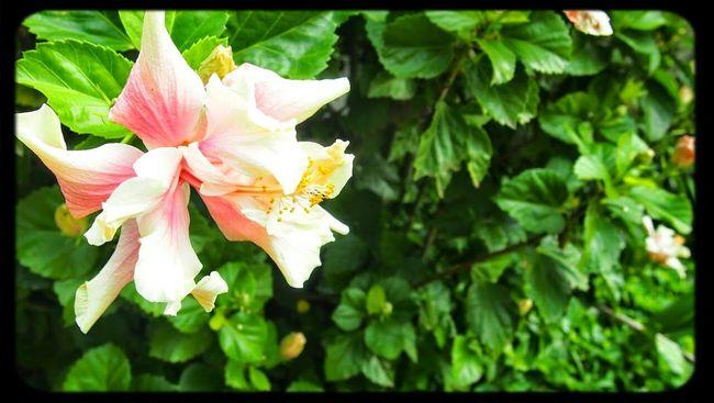 Hello World Flowerslove