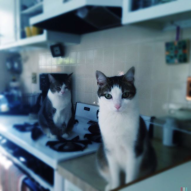 Stove cats. Cats