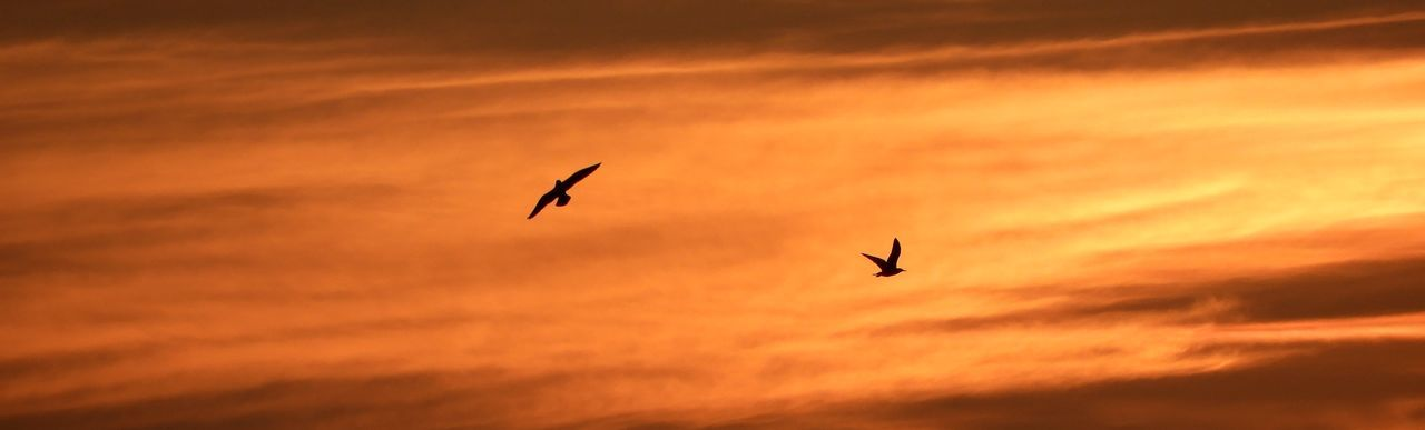 Animal Themes Animals In The Wild Beauty In Nature Bird Cloud - Sky Day Flying Freedom Low Angle View Mid-air Nature No People Orange Color Outdoors Silhouette Sky Spread Wings Sunset Nature Photography Birds Flight Sun Cant Help It, Its Just My View..