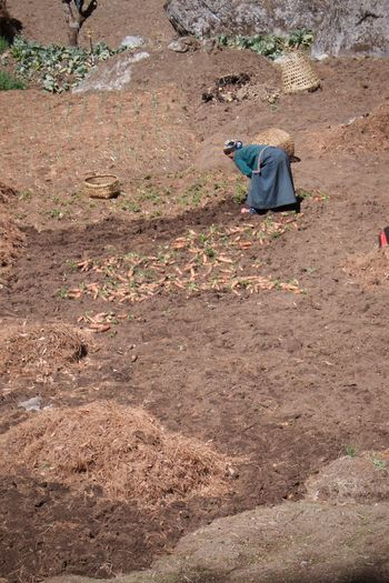 Carrots Countryside Farming Farming Life Leicacamera Nepal Nepalese Nepalese Culture Nepalese Farmer Nepalesefood Remote Way Of Life