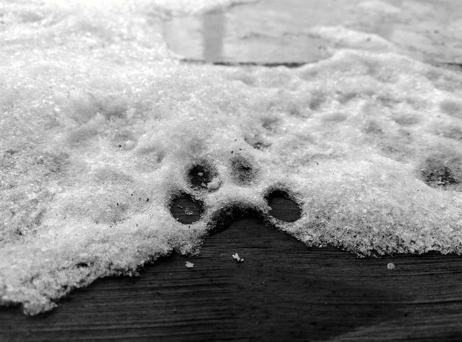 No People Close-up Outdoors Day Paw Print Nature Snow Snow Print Winter Winter_collection Winter Day Winter Cat Cat Cat Paw Cat Paw Print