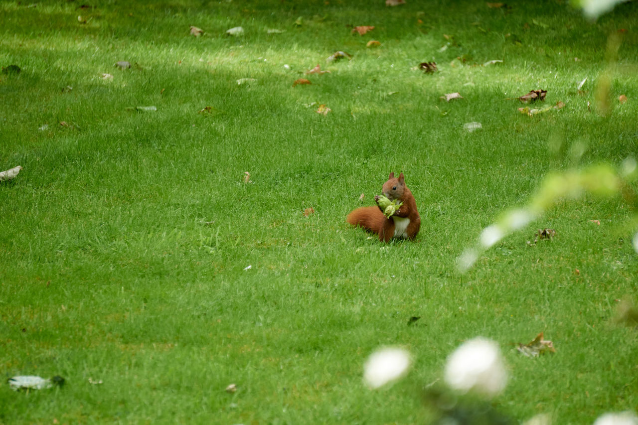 Beautiful stock photos of squirrel, Animal Themes, Animal Wildlife, Animals In The Wild, Beauty In Nature