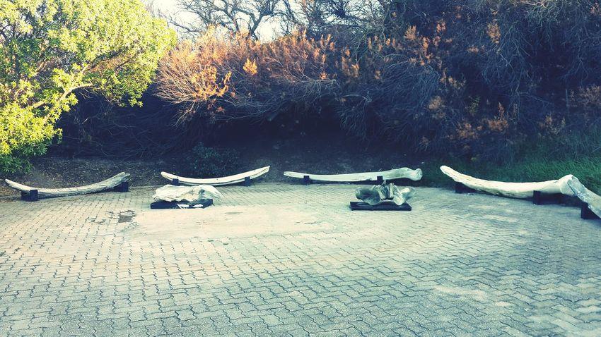 Pequeña plaza cuyos bancos son costillas y vértebras de una ballena