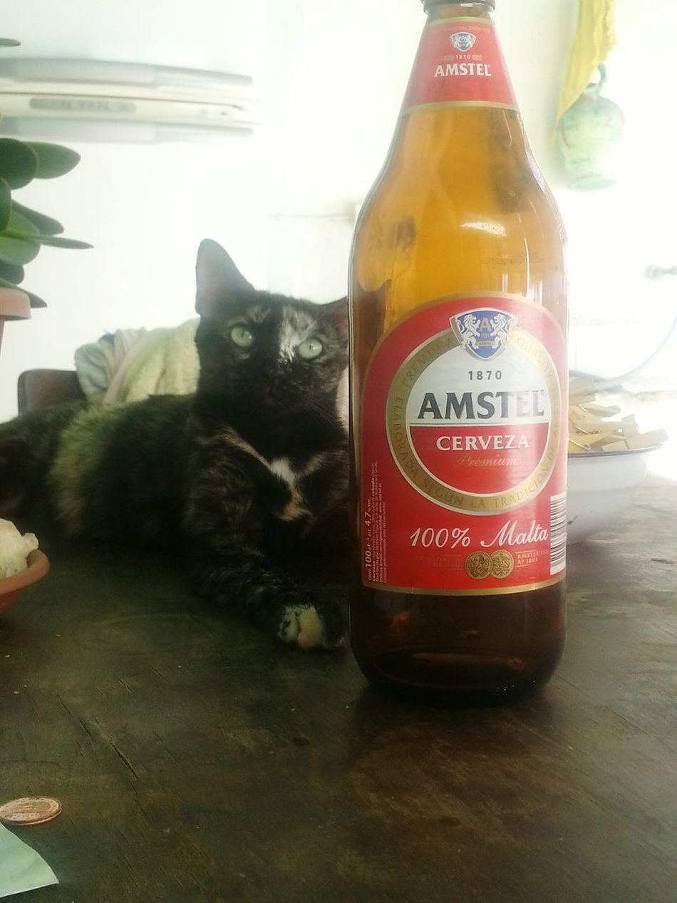 EyeEm Best Shots Gatodeldia Gatita Linda Instacatlove Gato Feliz Perros&gatos
