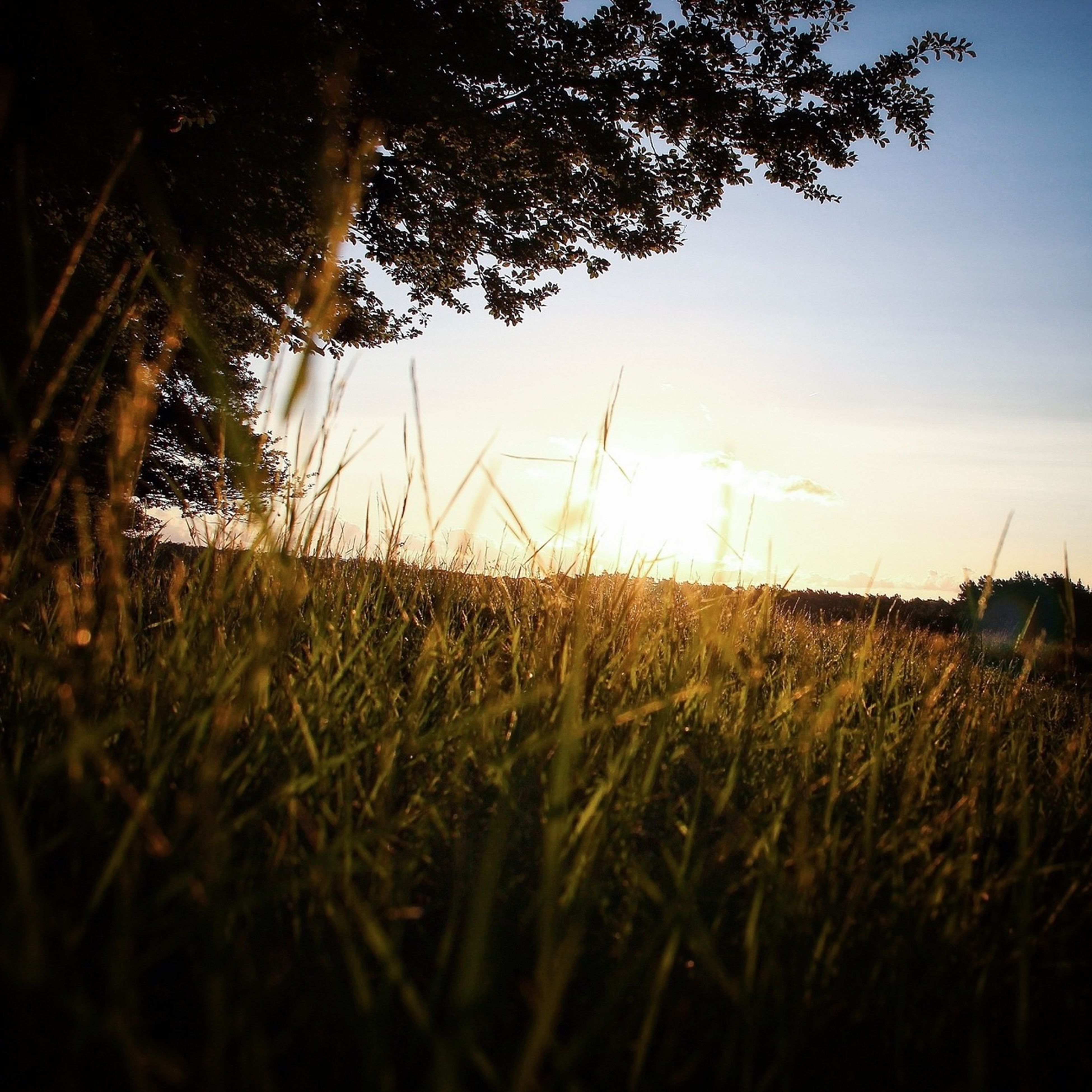 grass, field, sunset, growth, tranquility, tranquil scene, sun, nature, plant, landscape, sky, beauty in nature, scenics, sunlight, grassy, silhouette, idyllic, no people, outdoors, rural scene