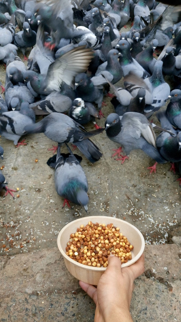 bird, real people, food, human hand, high angle view, feeding, food and drink, human body part, one person, animals in the wild, animal wildlife, men, grain, eating, outdoors, lifestyles, large group of animals, day, nature, people