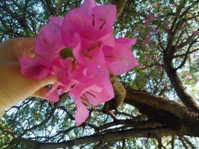 Bugambilia by: Victoria Sarabia