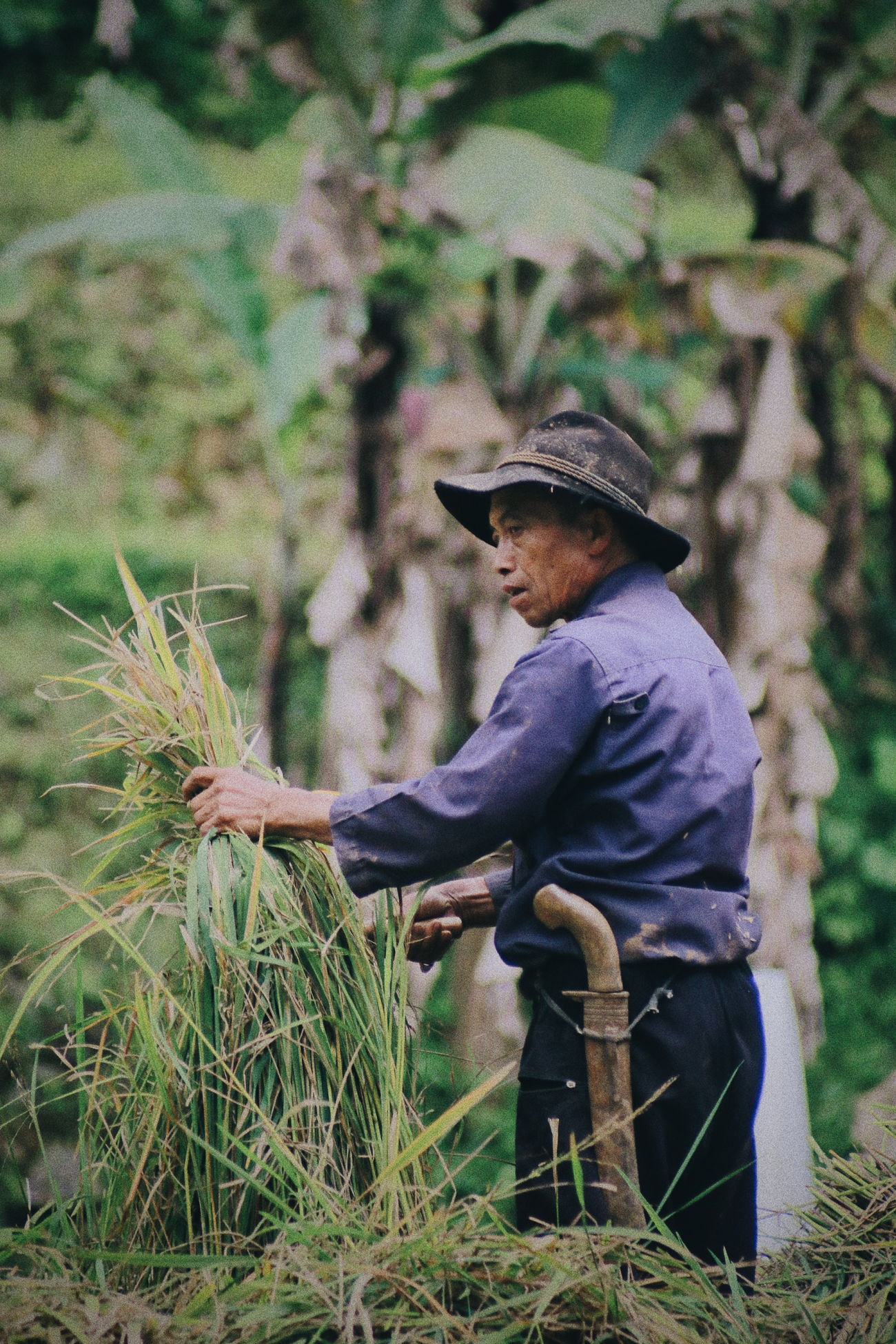 Farmer... Real People One Person Working Field Occupation Outdoors Lifestyles Day Men Nature Growth Full Length Farmer One Man Only Adult Only Men Adults Only People Humaninterestphotography Humaninterest Humaninterestindonesia Activity Traditional Farmer Nature