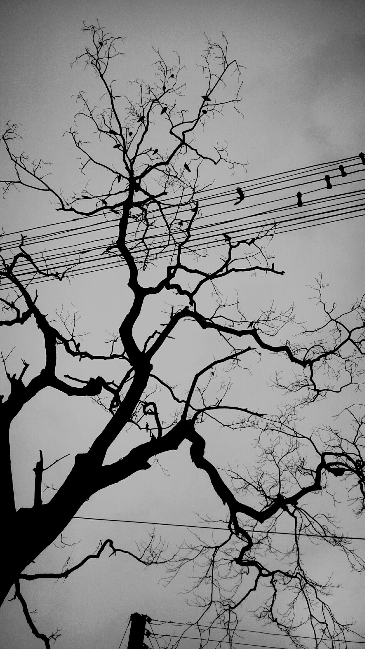iNToxiCaTeD...WiTh...MaDneSs....i'M..iN..LovE......WiTh...MY...SadNeSs..... Black And White Photography Black And White Collection  Treescollection Tree_collection  Tree Porn Tree Silhouette Tree Branches Tree And Bird Tree And Sky Naturephotography Nature_perfection Nature_collection Natural Pattern Naturelover Nature's Diversities Life's Simple Pleasures... Life Is A Journey Unknown Journey Loneliness Photography Is My Escape From Reality! Monochrome Photography