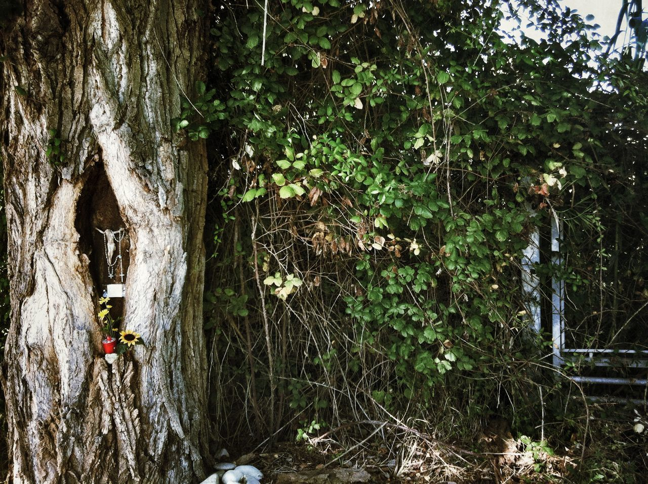 Crucifix In Tree