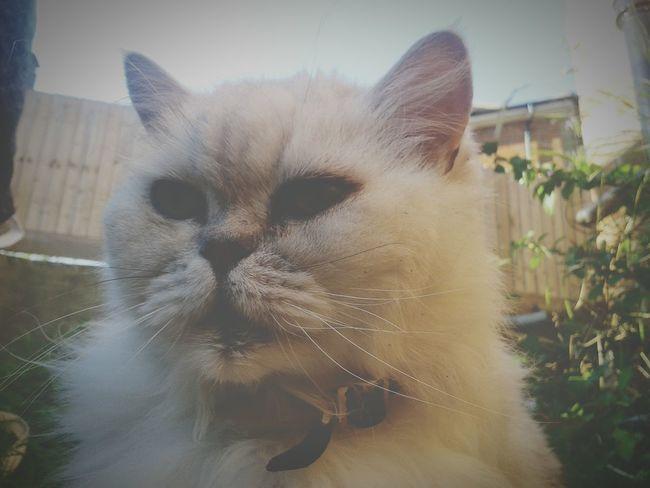 Pet Freddie My Cat