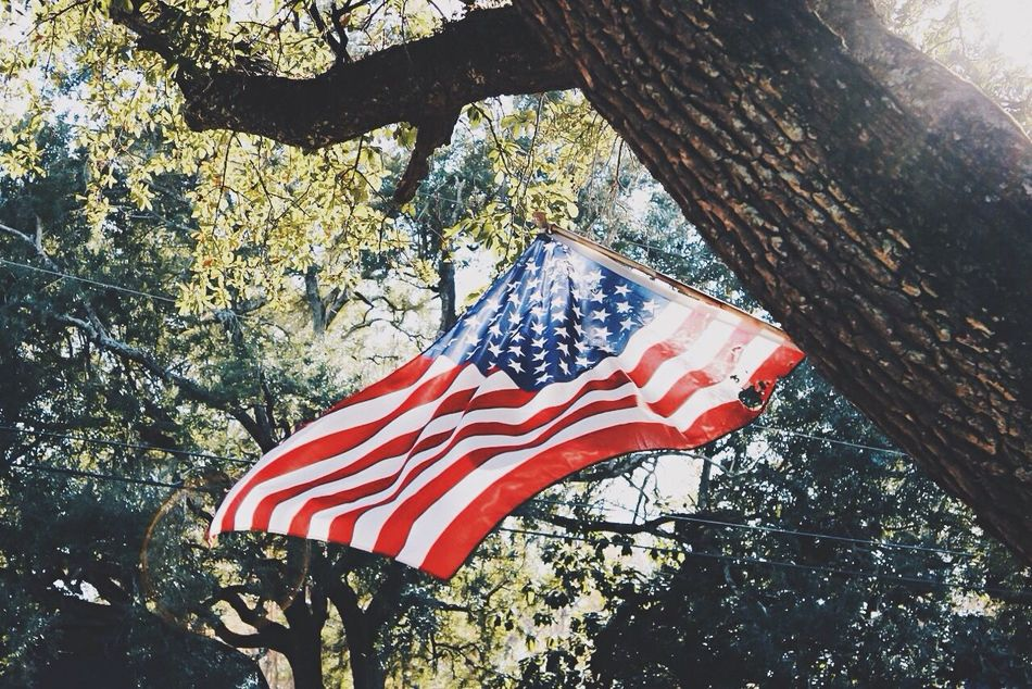Beautiful stock photos of memorial day, American Culture, American Flag, Branch, Day