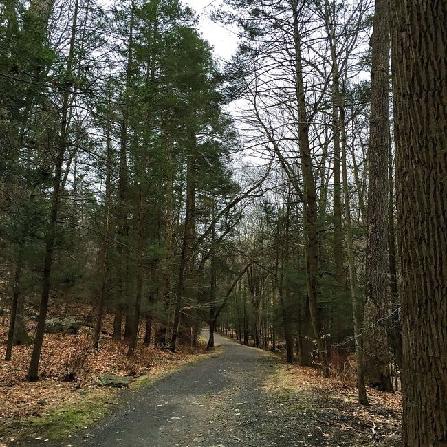 Big tree trail Forest Woods Nature Trailrunning Trees Solitude Running Trail Running Tree
