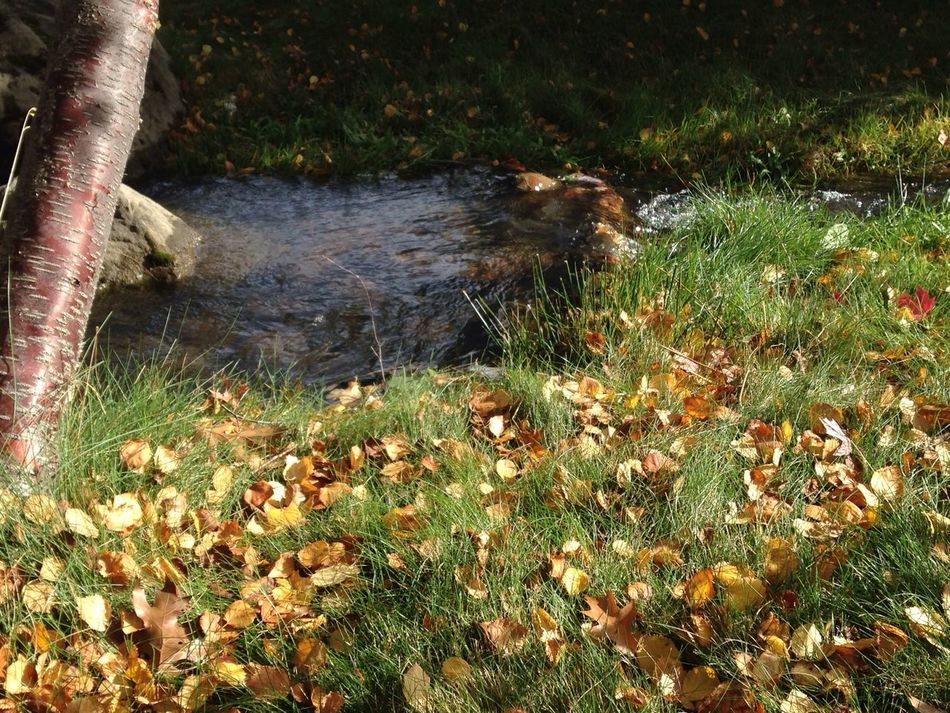 Fall is in the air... The Calmness Within Autumn Nature Water