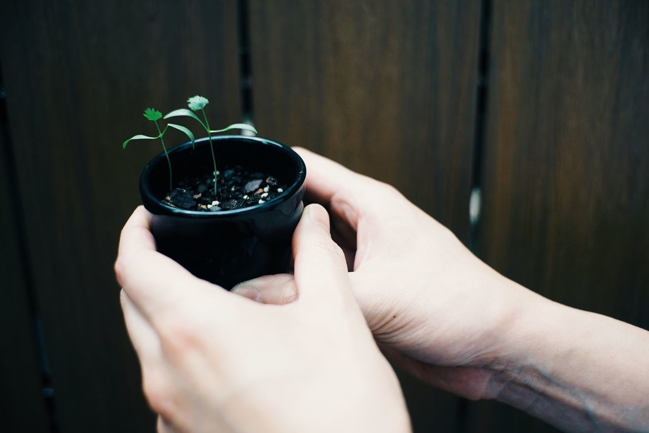 Human Hand Real People Human Body Part One Person Holding Plant Indoors  Close-up Women Lifestyles Day People
