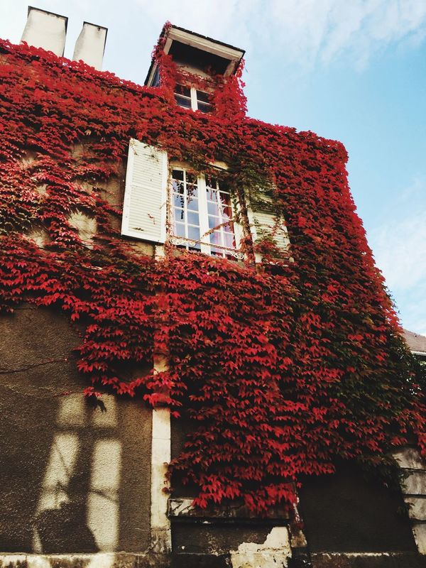 Architecture Red House Brick Wall Creeper Plant Chartres france