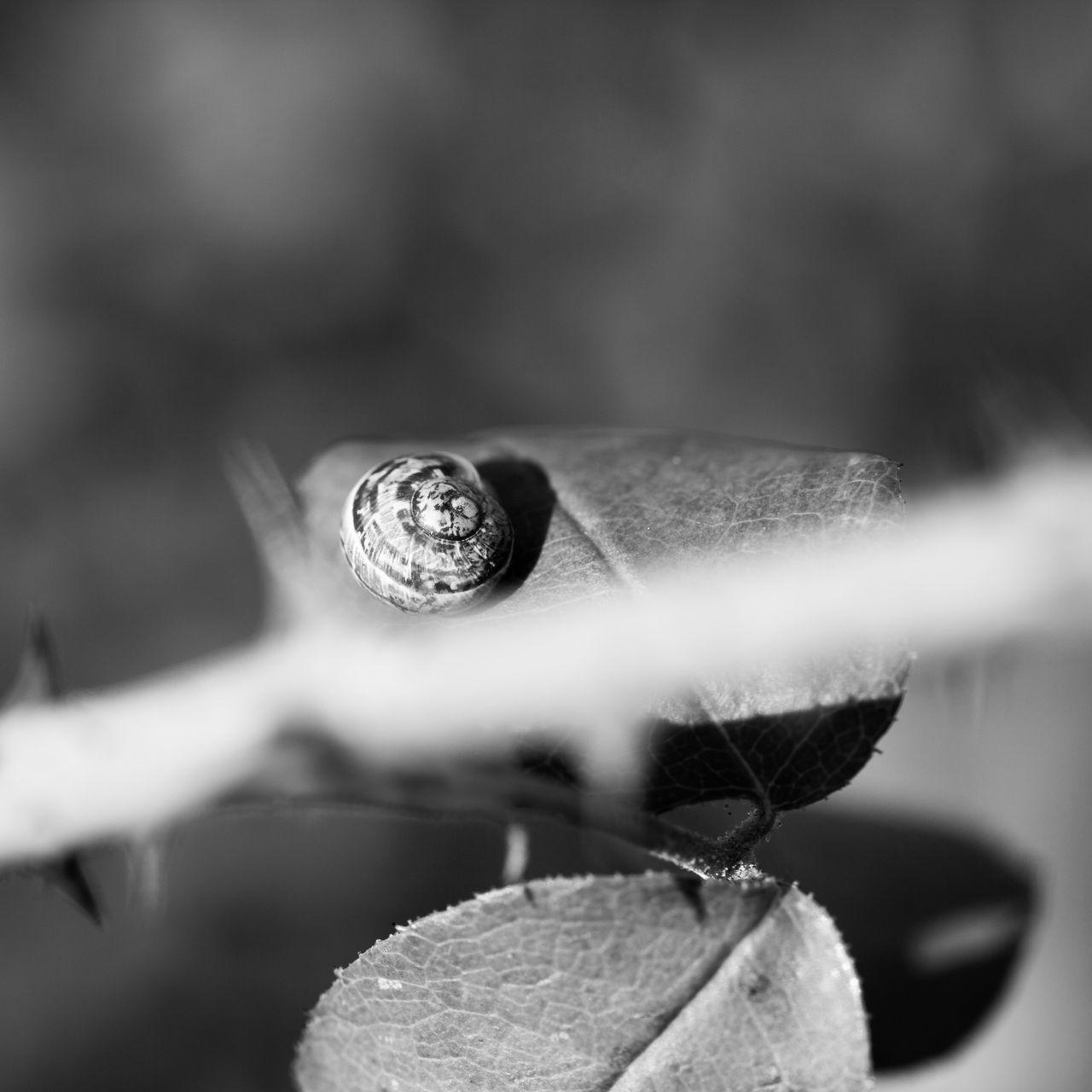Escargot Fleur Flower Flowers Insect Insect Photography Insecte Nature Nature Photography Plant Plante Snail Snails Snail🐌