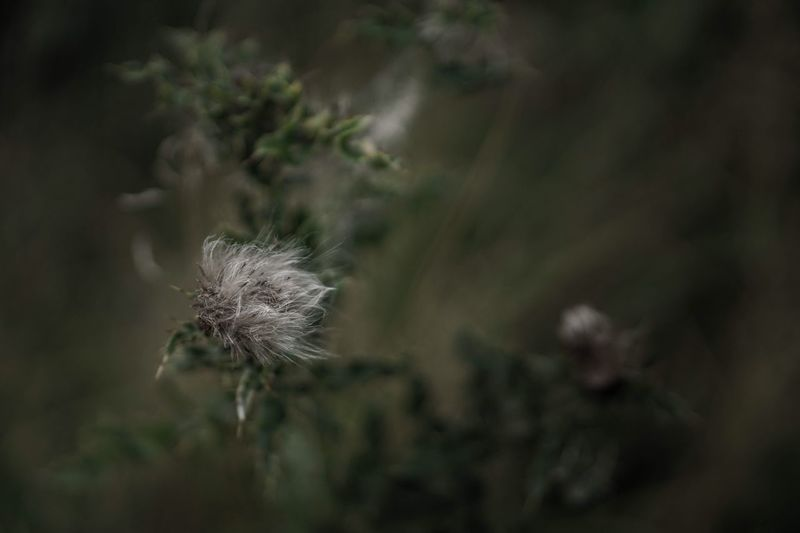   fluffy   Fragility Close-up Freshness Nature Photography Nature_collection Atmospheric Mood Focus On Foreground Softness Nature Fine Art Photography Fine Art Autumn EyeEm Nature Lover EyeEm Gallery Eye4photography  EyeEm Taking Photos No People Outdoors Blossom Everything And Anything Photography Selective Focus EyeEm Team September