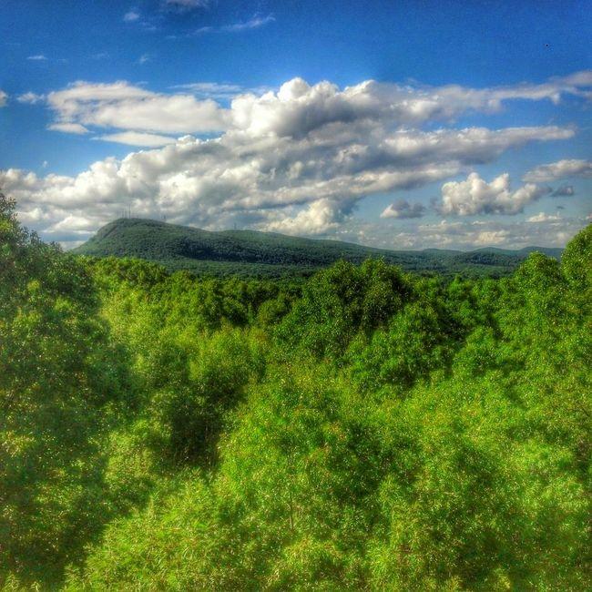 Taking Photos TheEliteMovement Eye Em Nature Lover Beauty
