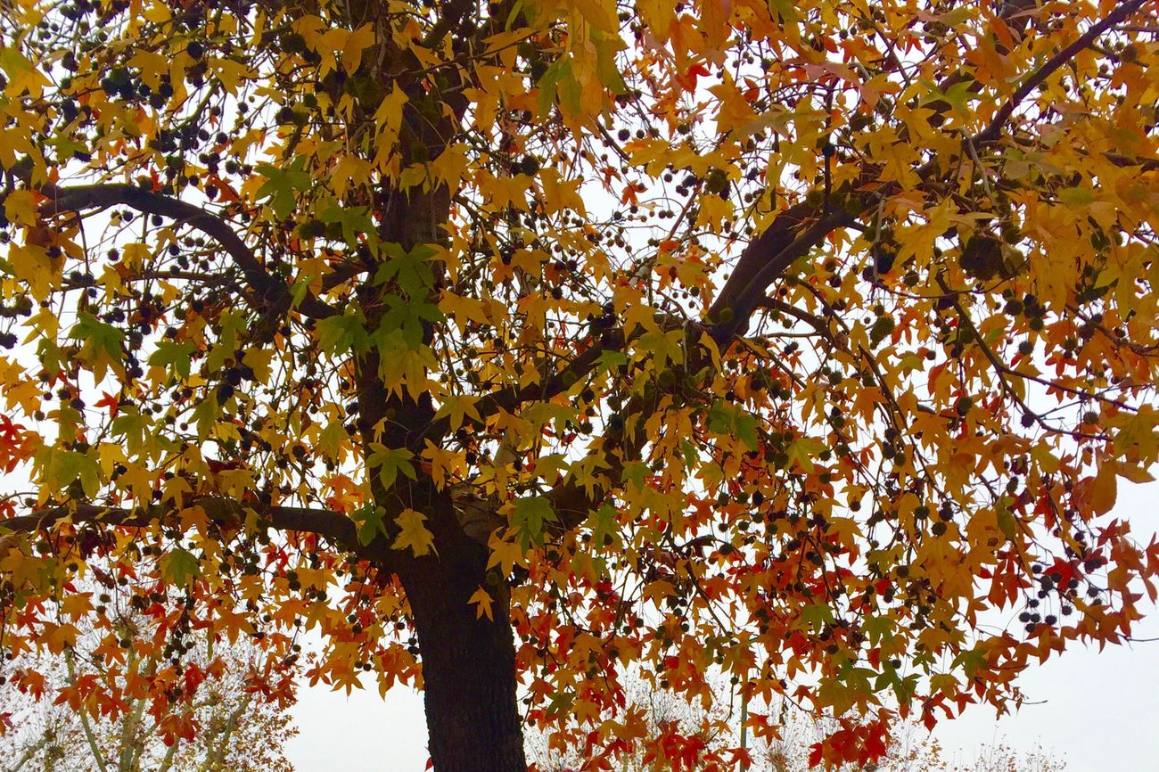 love this Autumn🍁🍂 Nature Autumn Colors