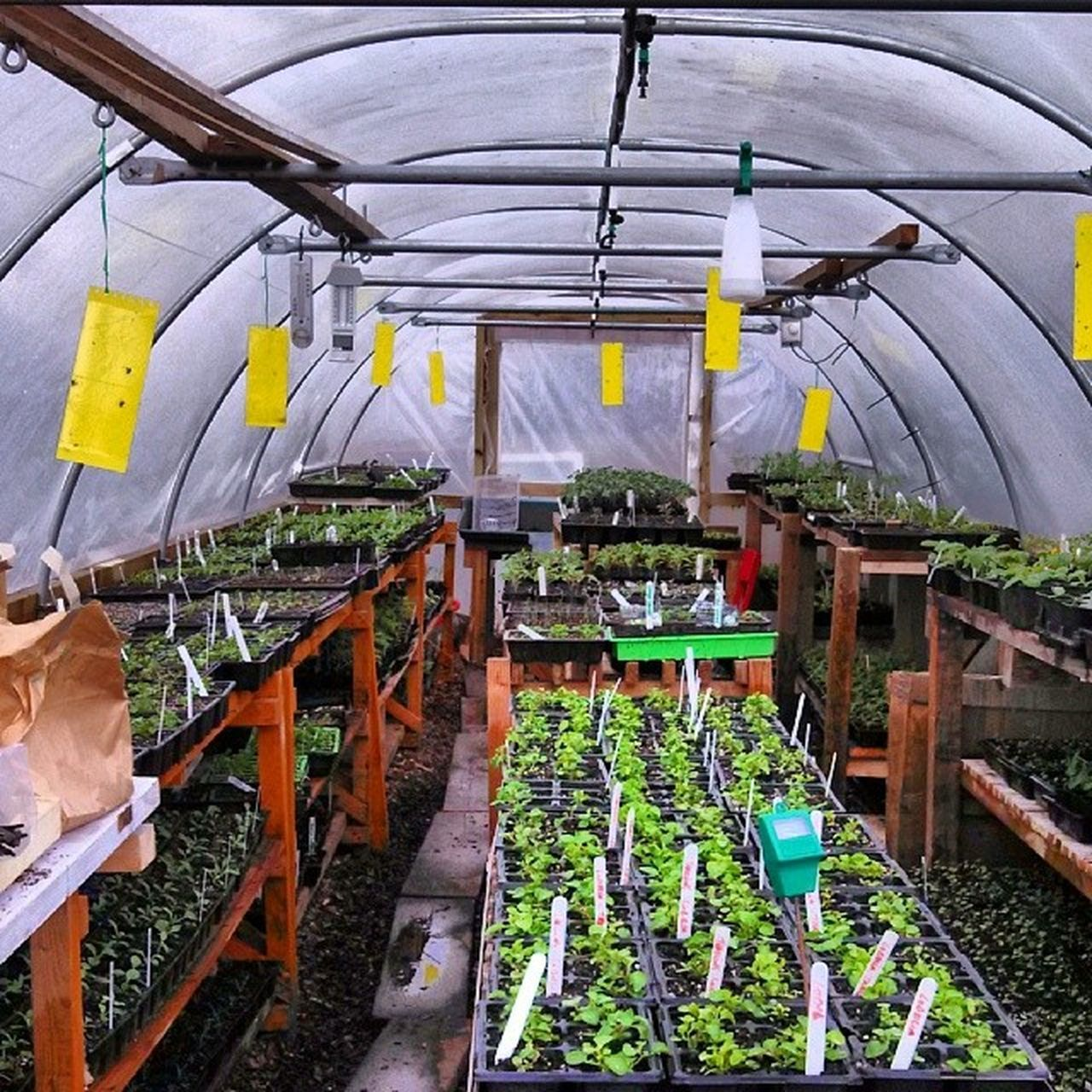 Polytunnel Madewelldevon Awesome Packed with beauty spring myoffice mydayattheoffice gardening gardeners live love life lucky