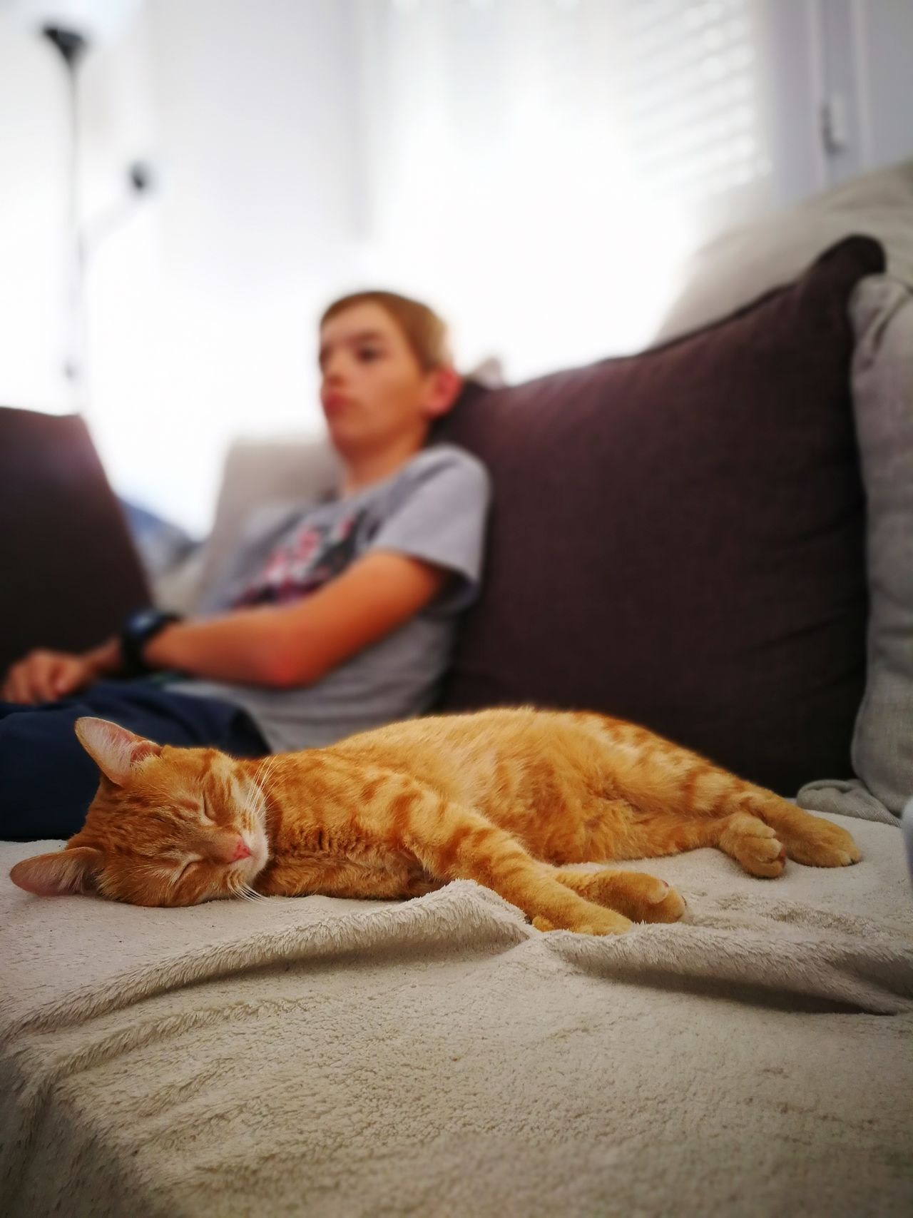 Sleeping cat 😻 One Animal Sofa Home Interior Domestic Animals Cat Sleeping Cat Mammal Pets Animal Themes Domestic Cat Relaxation Living Room