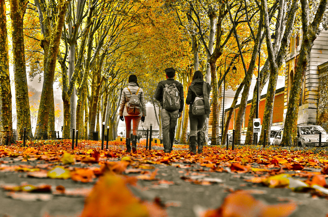 autumn, change, leaf, tree, orange color, full length, nature, walking, beauty in nature, forest, togetherness, outdoors, adult, people, day, men, branch, young women, young adult