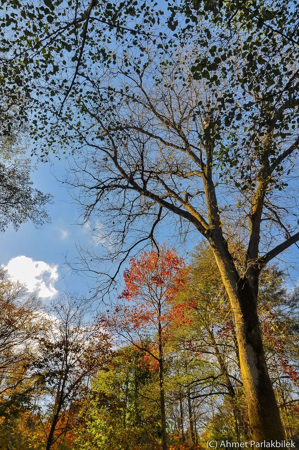 Tree Low Angle View Branch Sky Nature Beauty In Nature Growth Outdoors Tranquility Autumn No People Cloud - Sky Day