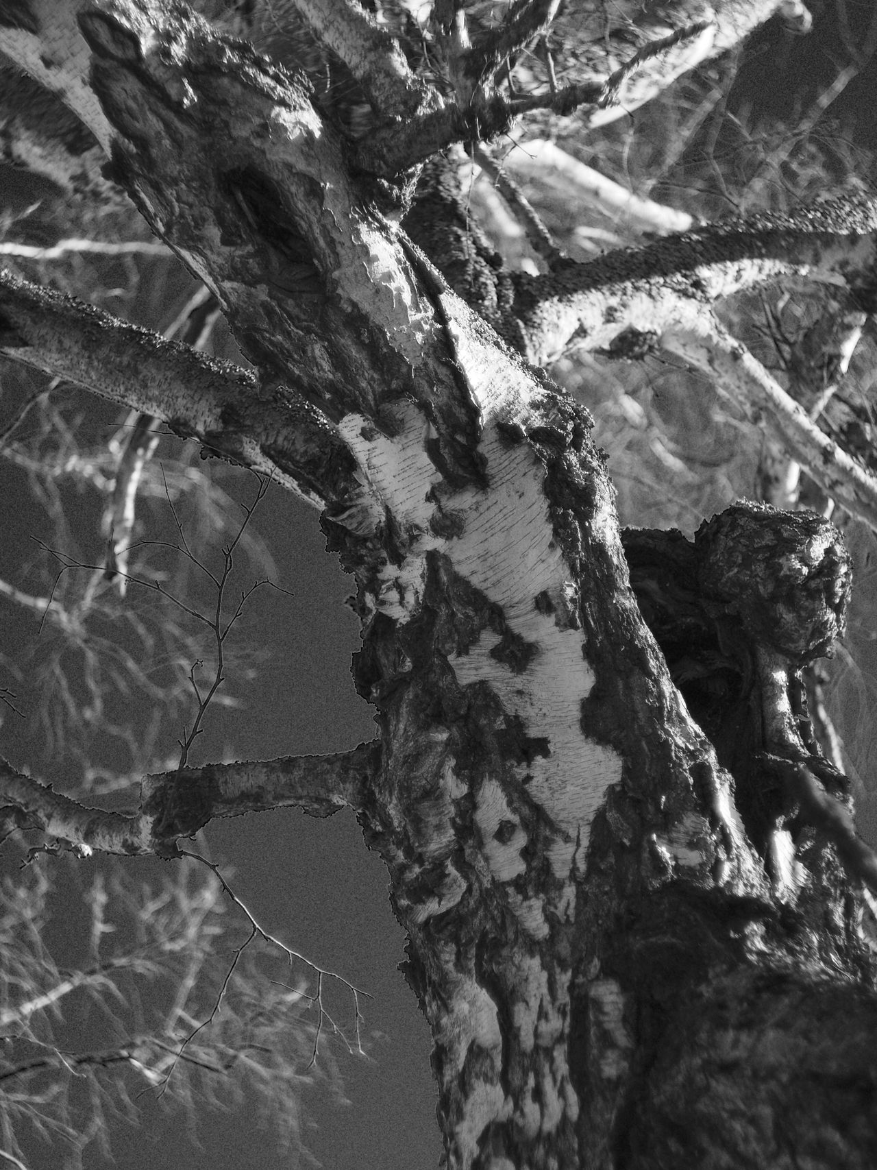 Foundation some new interesting trees today. It was freezing and I have a feeling I will spend some time in bed after this 😜 Tree Tree Trunk Nature No People Branch Day Outdoors Close-up Textured  Water Animal Themes Monochrome Photography Monochrome Black And White Black & White Blackandwhite Shallow Depth Of Field Nature Tree