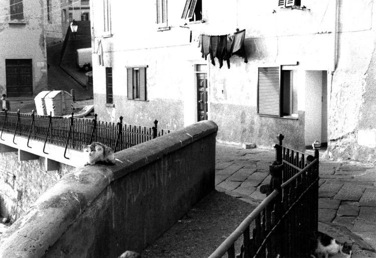 Animal Themes Black And White Cat Cat Watching Day Hanging Clothes Marina My Old Camera No People Old Buildings Old Stairs Outdoors