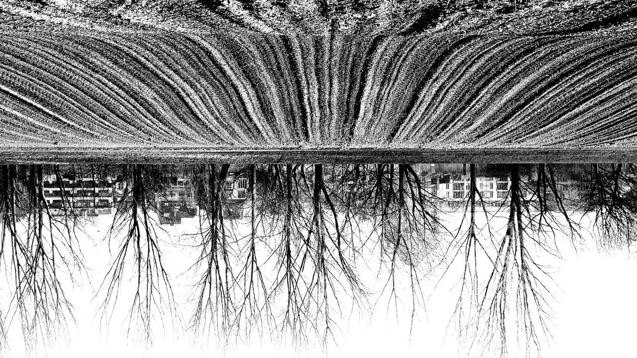 Upside Down Image Of Field And Bare Trees Against Clear Sky