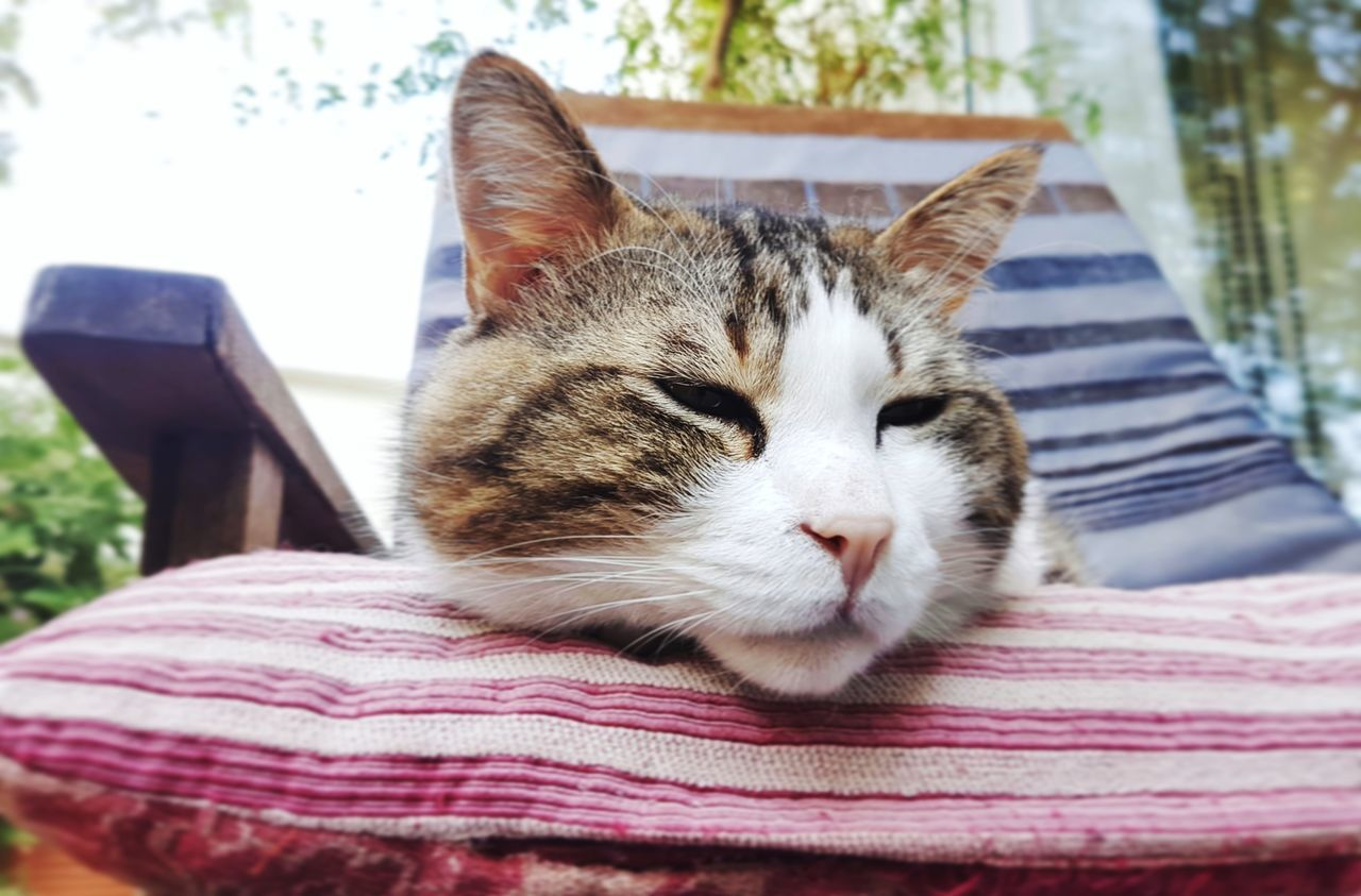 Pets One Animal Domestic Animals Domestic Cat Animal Themes Mammal Close-up Day Indoors  No People Portrait