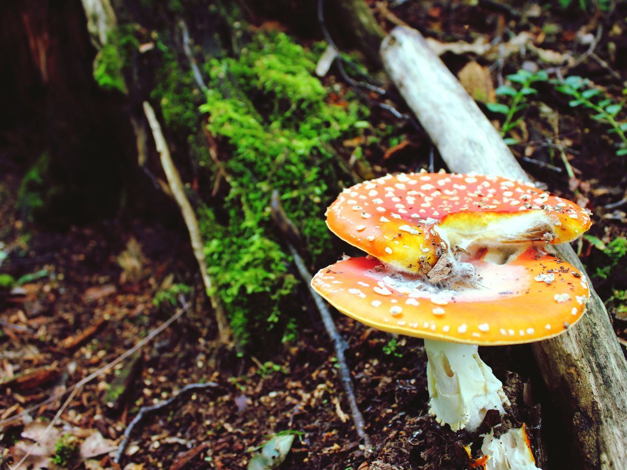 🇷🇺 St.Petersburg (Russia July 2016) Russia Stpetersburg Mushroom Forest Travel