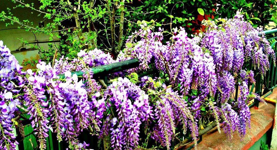 Bunch Of Purple