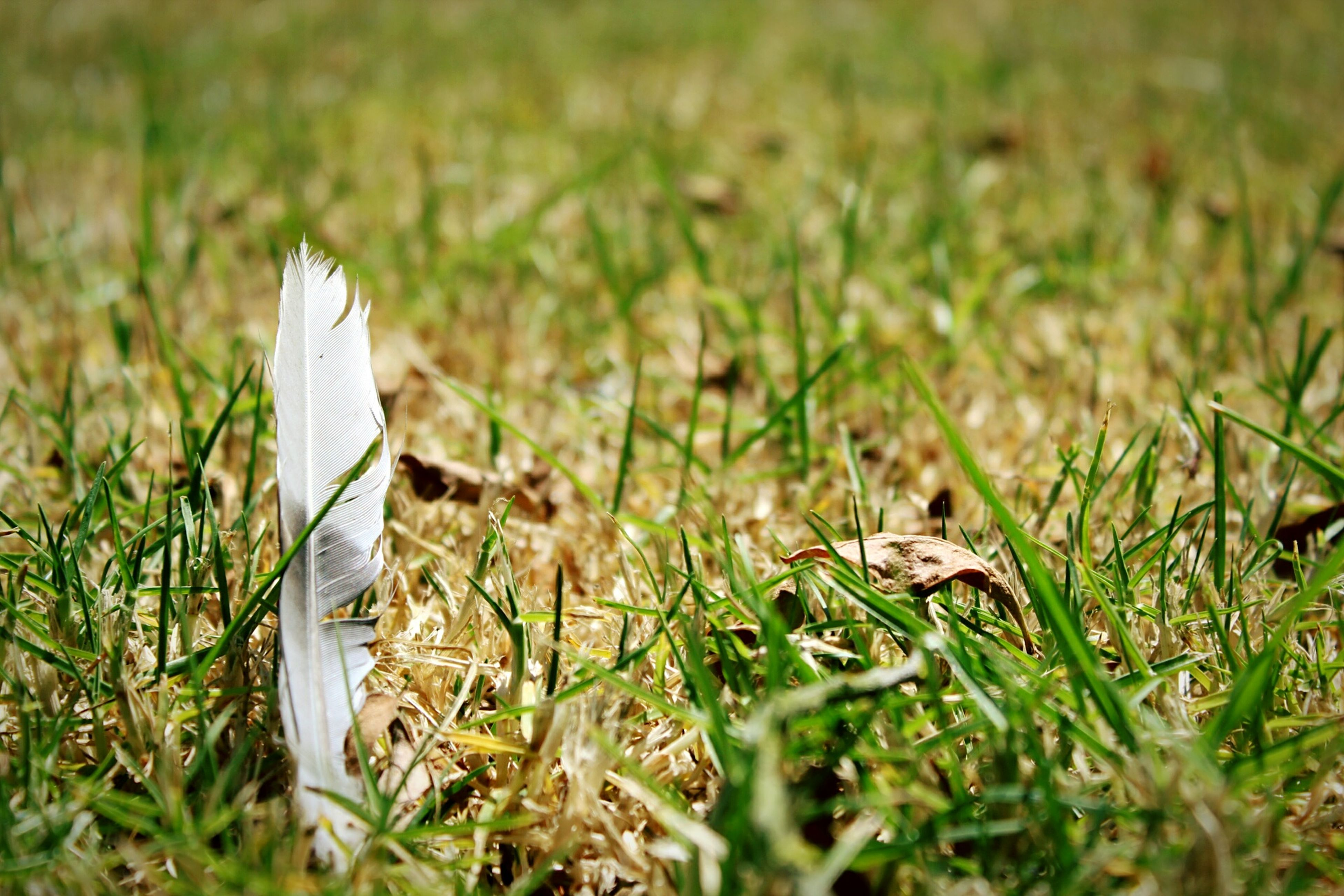grass, selective focus, no people, nature, field, day, close-up, outdoors, fragility, beauty in nature, animal themes