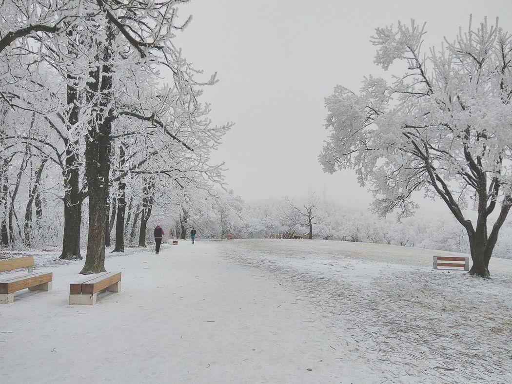 snow Tree Winter Nature Cold Temperature Outdoors Fog Snowing Normafa Hungary Xiaomiphotograph