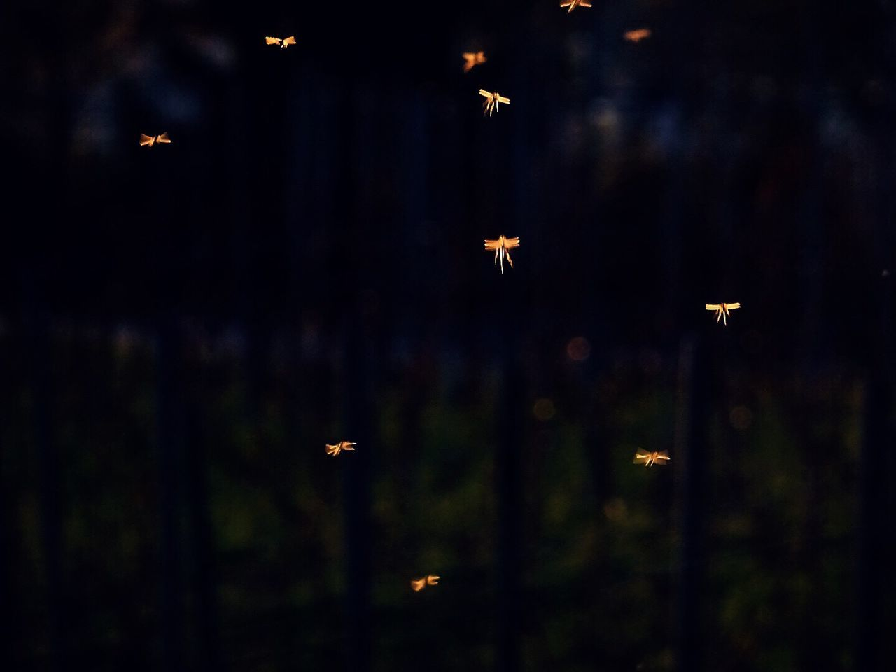 Mosquito Flying Animal Themes No People Animals In The Wild Outdoors Bird Airplane Nature Night Close-up Exceptional Photographs Fine Art Photography Beauty In Nature Animals In The Wild Nature Drastic Edit Flying High