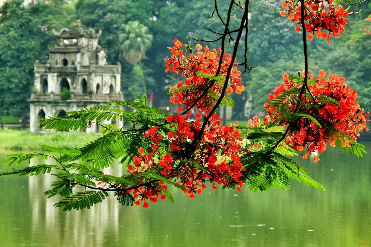 Beautiful stock photos of vietnam, Architecture, Beauty In Nature, Branch, Building