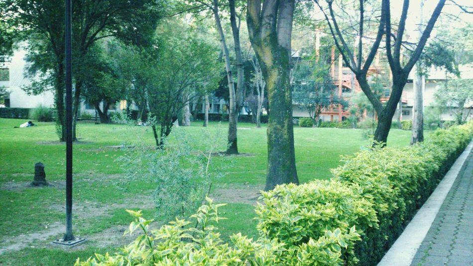 UNAM First Eyeem Photo
