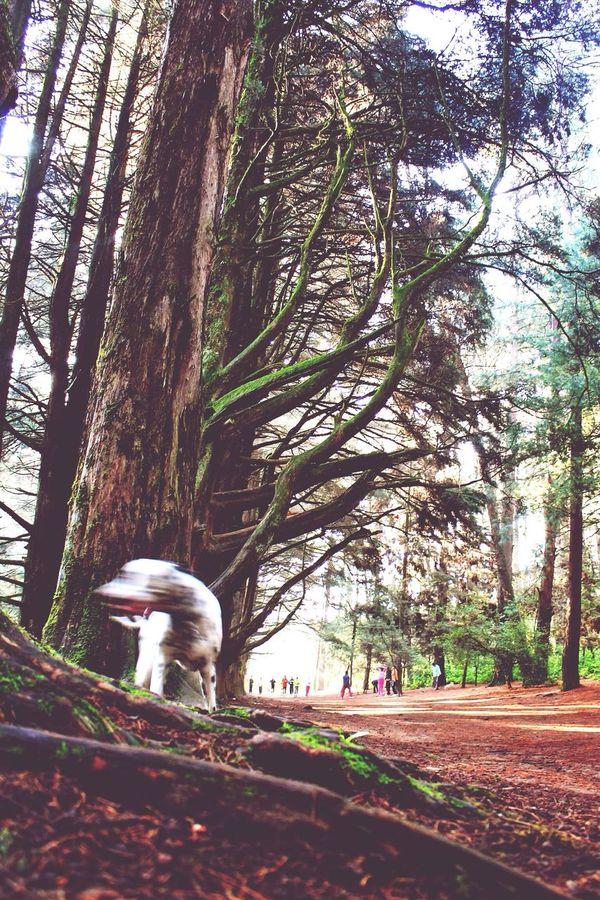 Urban Escape I love to escape here and run through its trails The Woods Near Home My Escape  Love To Run