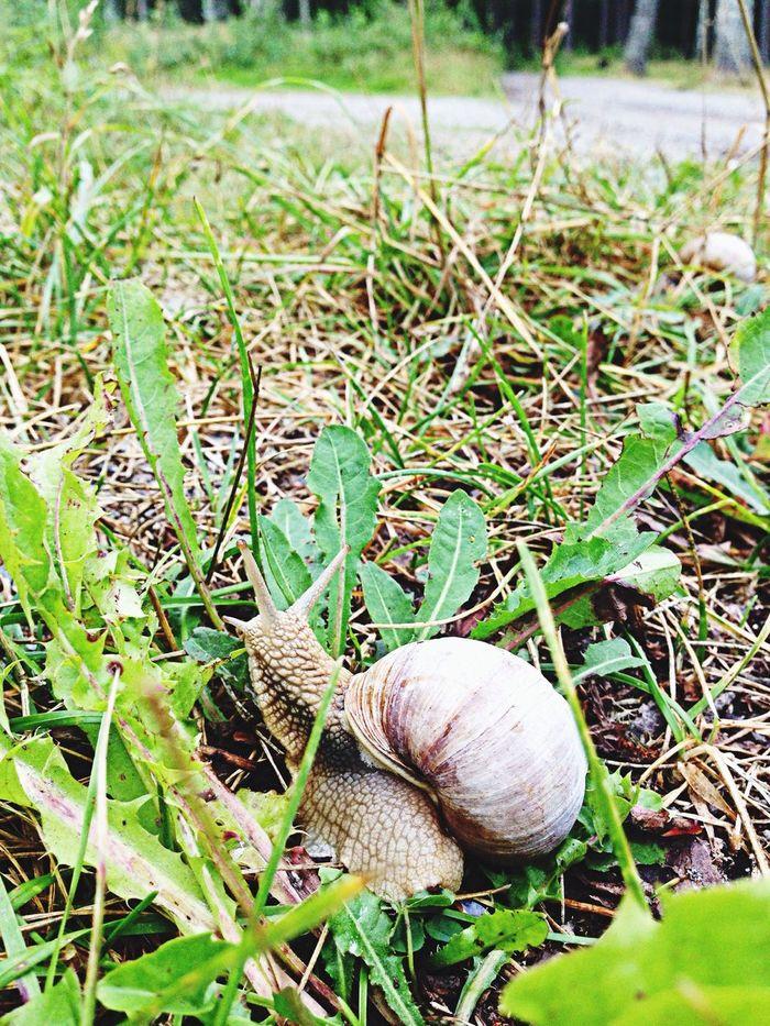 Snail Animals Rain Summer