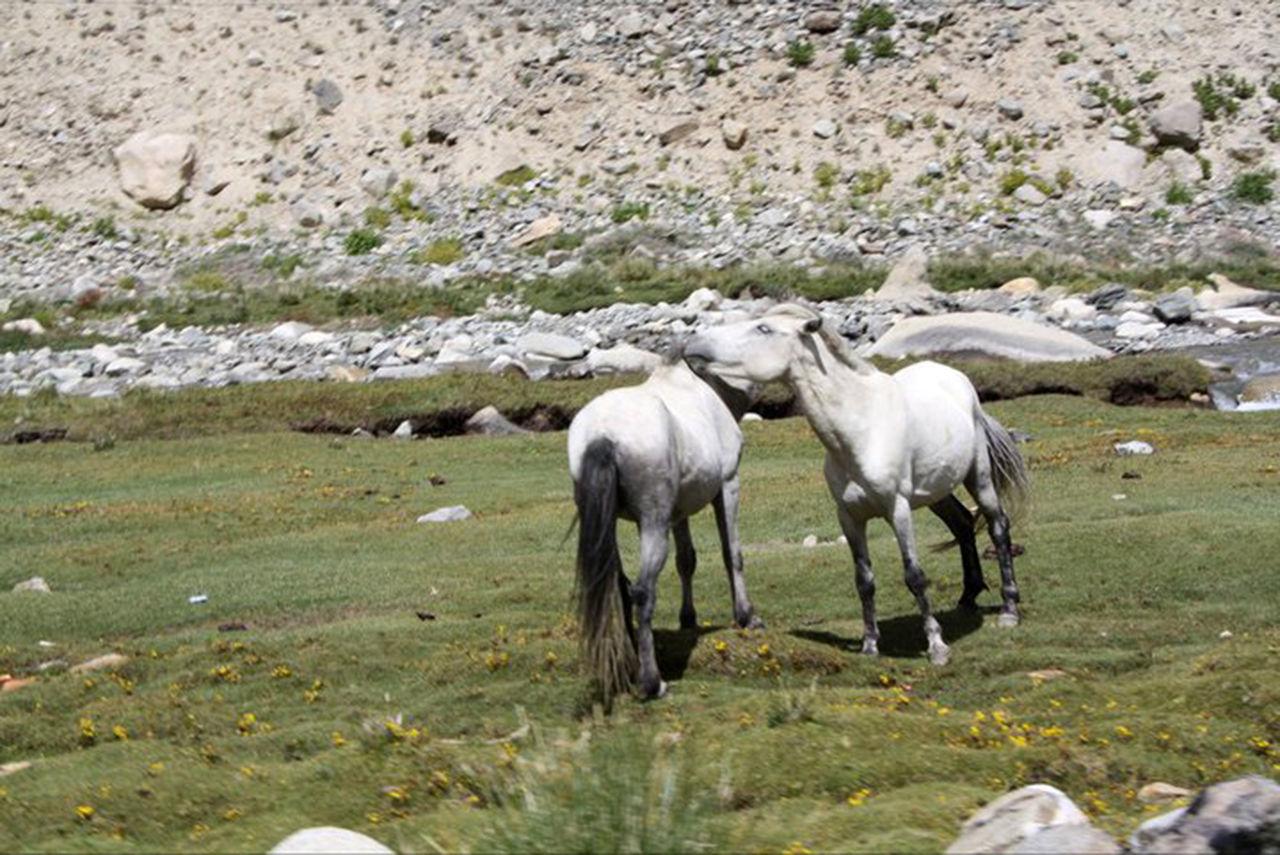 Leh & Ladakh Animals In The Wild Day EyeEmNewHere Himalayas Ladakh Lake Landscape Leh Ladakh Mountain Mountain Range Nature Nature Photography No People Outdoors Rafting Rakeshtiwari Rocky Mountains Sky And Clouds Snowy Mountains Water Sports Wild Animal Wildlife & Nature Wildlife Photography