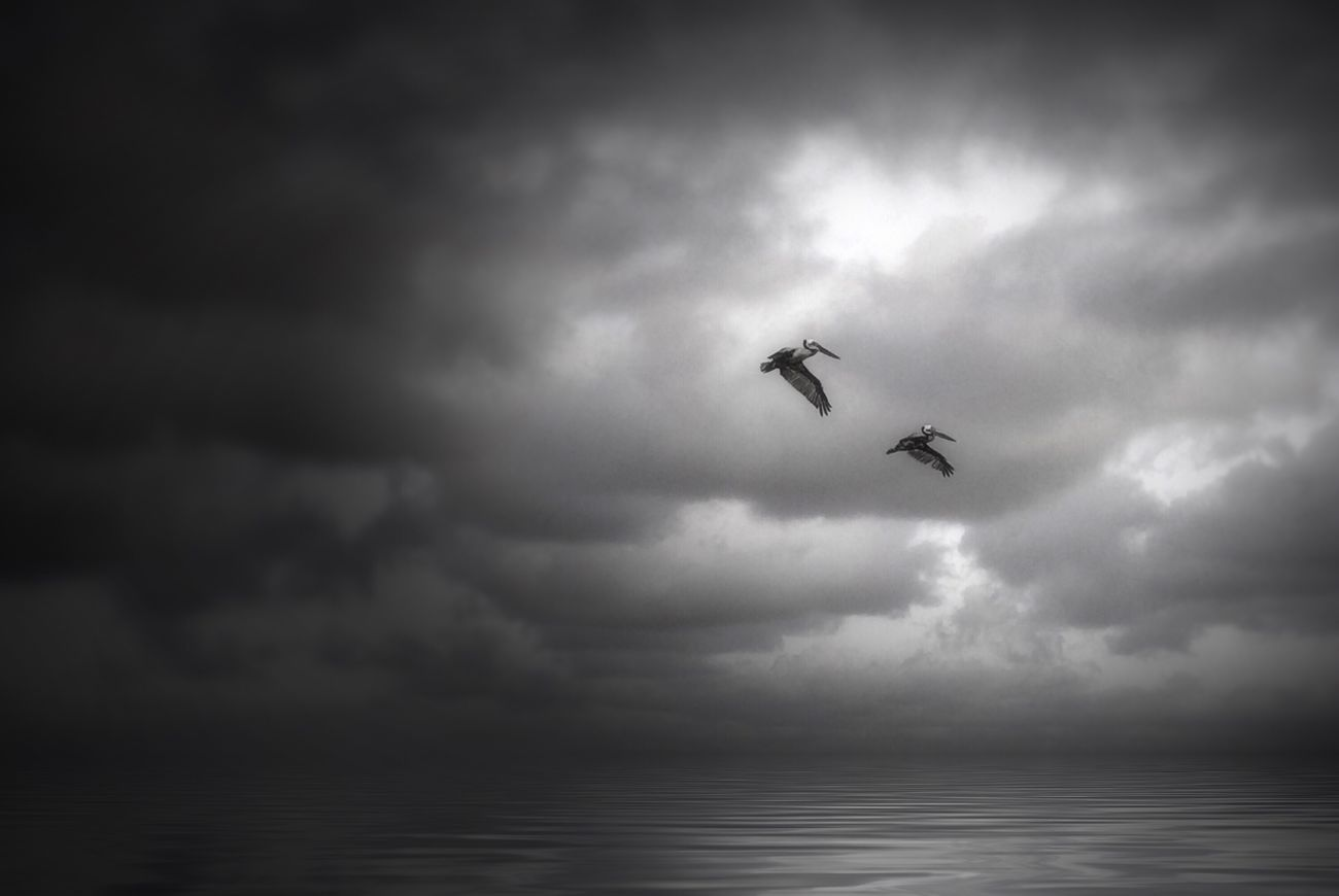 Flying Cloud - Sky Sea Fine Art Photography Monochrome Photography EyeEm Best Shots - Black + White Blackandwhite Black & White EyeEm Masterclass Shootermag Cloud_collection  EyeEm Nature Lover Landscape_Collection Spread Wings Horizon Over Water Sky_collection Pelicans Beach Photography Popular Photos