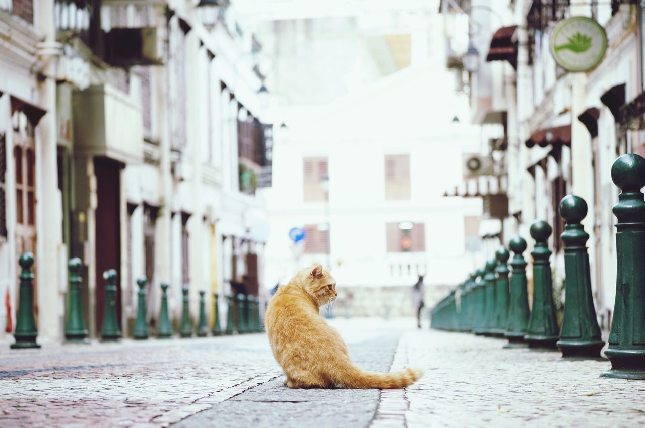 Beautiful stock photos of katzen, Animal Themes, Architecture, Bollard, Building Exterior